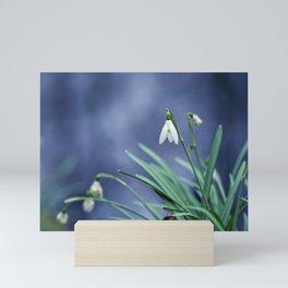 Snowdrop Flower Mini Art Print