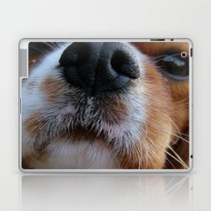 Nosey Dog Laptop & iPad Skin
