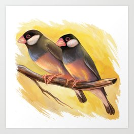 Java Sparrow finches realistic painting Art Print