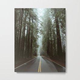 Through The Redwoods. Metal Print