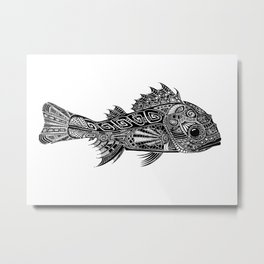 A Surly Rockfish - Atlantic Thornyhead-Longspine Metal Print
