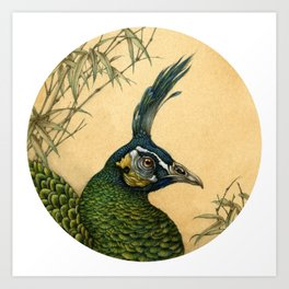 Green Peafowl Head Art Print