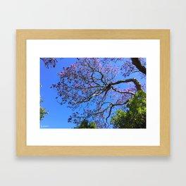 Blue Jacaranda 1/3 Framed Art Print