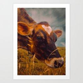 Dairy Cow Eating Grass Art Print