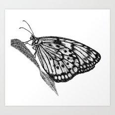 Butterfly Wigs Art Print