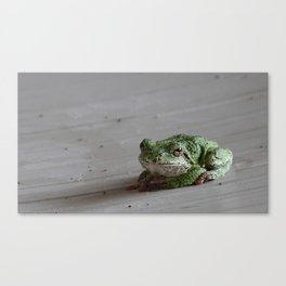 Smirking Grey Tree Frog Canvas Print