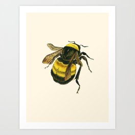 Vintage Scientific Bee Art Print