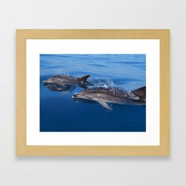 Mother and baby spotted dolphin Framed Art Print