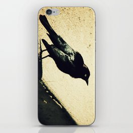 Little Blackbird iPhone Skin
