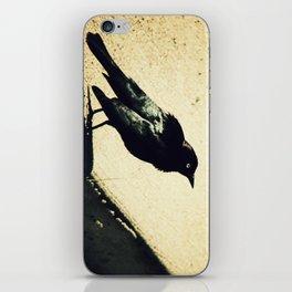 Little Blackbird iPhone Skin