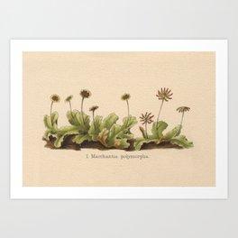 Antique Moss Lithograph Art Print