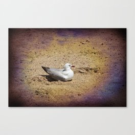 Gull on sand Canvas Print