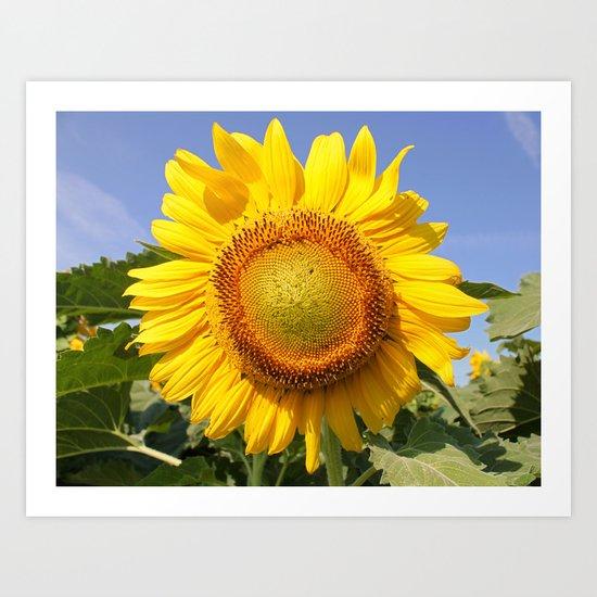 View the Sun! Art Print
