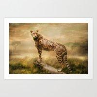 cheetah Art Prints featuring Cheetah by tarrby/Brian Tarr