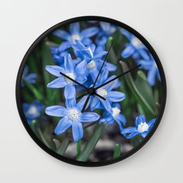 Easter Snow Glories Wall Clock
