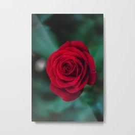 Romantic Red Rose Metal Print