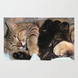 Mother Tabby Cat Suckling Four Newborn Kittens Rug