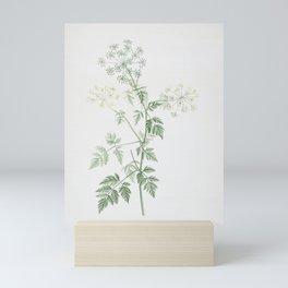 Vintage Hemlock Flowers Illustration Mini Art Print