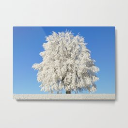 Frost Covered Tree Metal Print