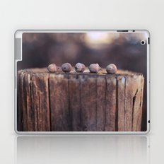 5 Acorns Laptop & iPad Skin