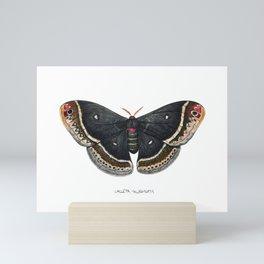 Calleta Silkmoth  (Eupackardia calleta) Mini Art Print