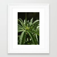 marijuana Framed Art Prints featuring marijuana by andyskye