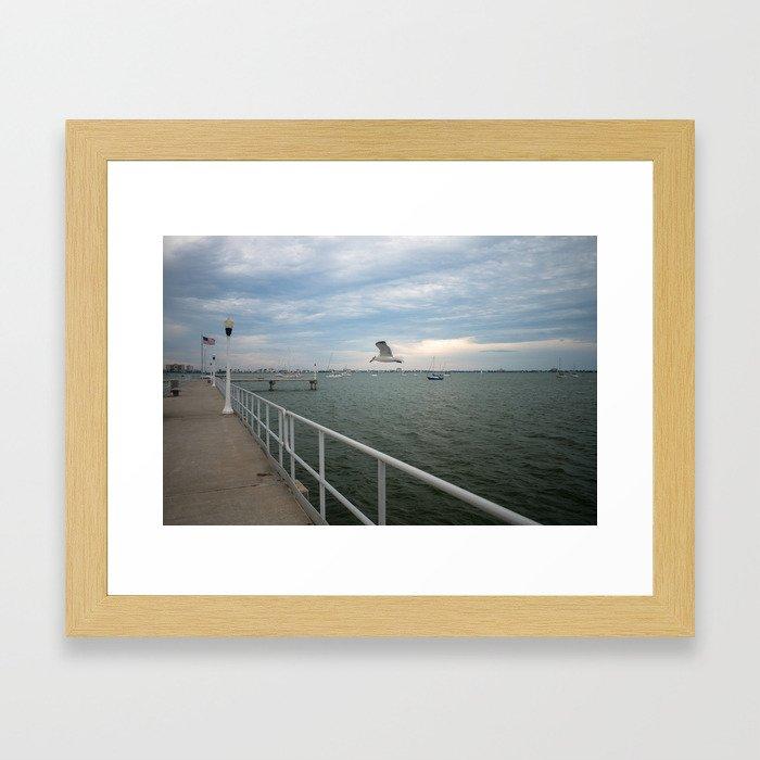 Gulfport Gull Framed Art Print