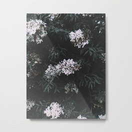 Flower Photography by Elijah Beaton Metal Print