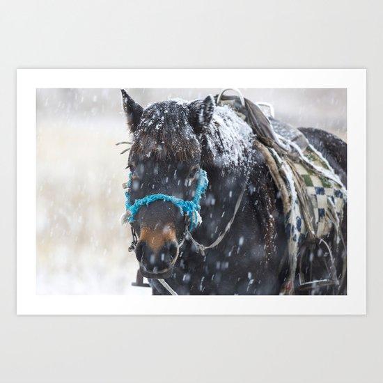 Winter Horse I Art Print