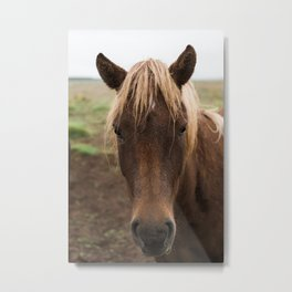 Horse in Iceland - nature photography Metal Print