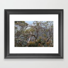 Australiana No. 1 Framed Art Print