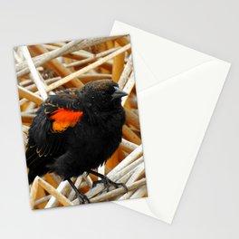 Juvenile Male Redwing Blackbird Stationery Cards