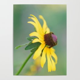 Portrait of a Wildflower Poster