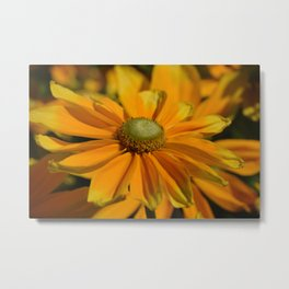 Sunshine in my Garden Metal Print