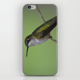 Ruby Throated Humming Bird At Rest iPhone Skin