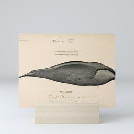 W Sidney Berridge - A Book of Whales (1900) - Figure 21: Southern Right Whale Mini Art Print