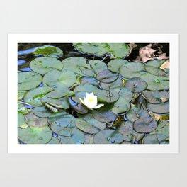 Raindrops in my pond Art Print