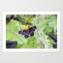 Bordered Patch Butterfly by Murray Bolesta Art Print