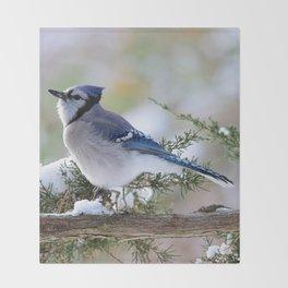Look Skyward Blue Jay Throw Blanket