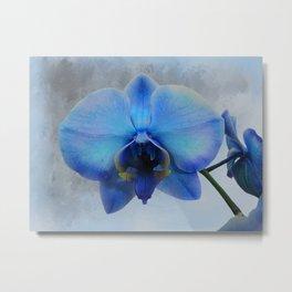 Blue Orchid Flower Art Modern Cottage Chic Home Decor Art A461 Metal Print