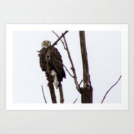 Kearney Eagle Art Print