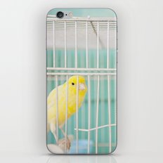 Yellow Bird against Turquoise Wall iPhone & iPod Skin