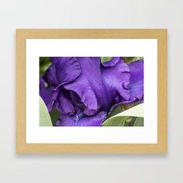 Iris Petal and Beard Framed Art Print