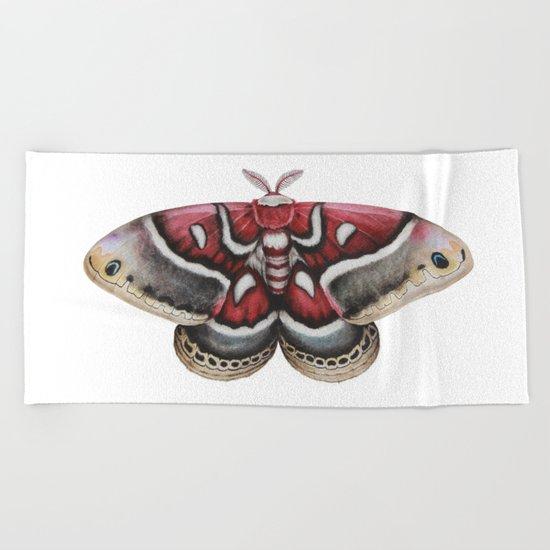 Moth - HYALOPHORA GLOVERI - Glover's silkmoth By Magda Opoka Beach Towel