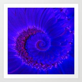 Dark Blue / Purple Gerbera Spiral Art Print