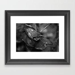 Rose Drops II  Framed Art Print