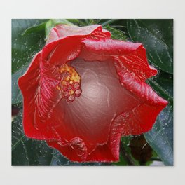 Hibiscus in cellophane Canvas Print