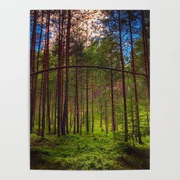 Magical Forest (Color) Poster