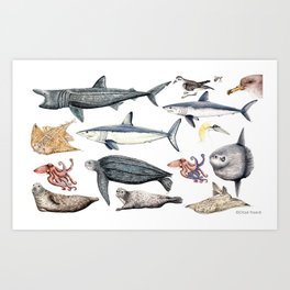 Marine wildlife Art Print