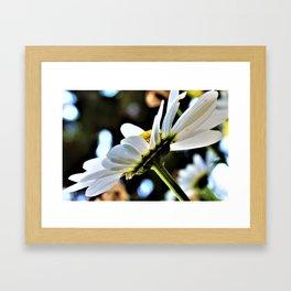 Flower No 4 Framed Art Print